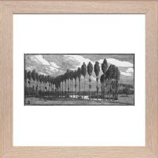 Poplars in France Signed - Ready Framed